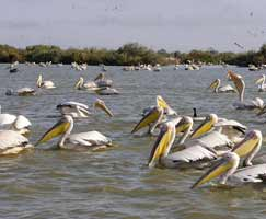 Ooty Tourism Honeymoon